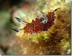okinawa diving1182