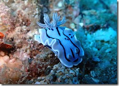 okinawa diving1183