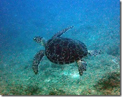 okinawa diving1184