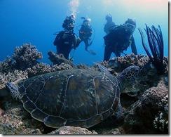 okinawa diving1186