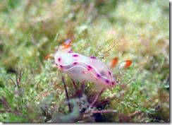 okinawa diving1188