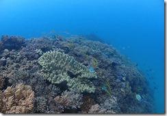 okinawa diving1189