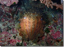 okinawa diving1192