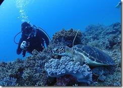 okinawa diving1196