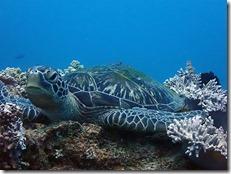 okinawa diving1197