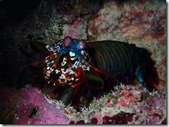 okinawa diving1198