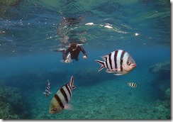 okinawa diving1199