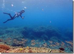 okinawa diving1200