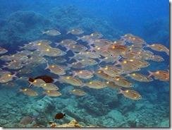 okinawa diving1201