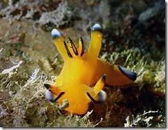 okinawa diving1203