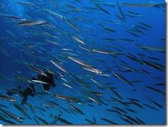 okinawa diving1205