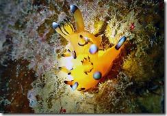 okinawa diving1211