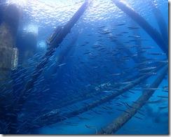 okinawa diving1213