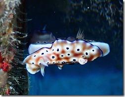 okinawa diving1214