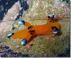okinawa diving1215