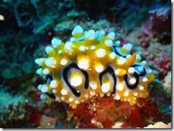 okinawa diving1219