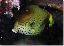 okinawa diving1220