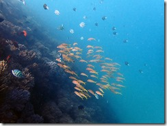 okinawa diving1221