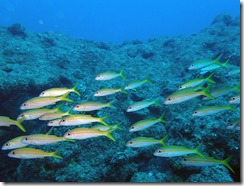 okinawa diving1230