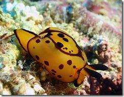 okinawa diving1233