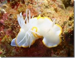 okinawa diving1235