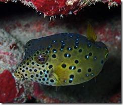 okinawa diving1239