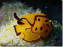 okinawa diving1258