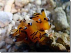 okinawa diving1262