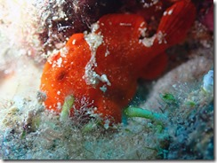 okinawa diving1263