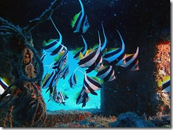 okinawa diving1264