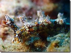 okinawa diving1268