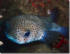 okinawa diving1271