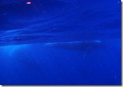 今日はクジラ!
