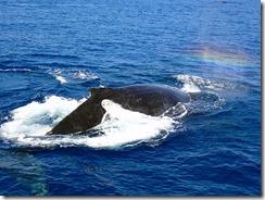 okinawa diving1280