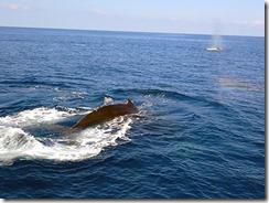 okinawa diving1281