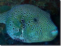 okinawa diving1283