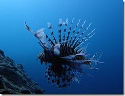 okinawa diving1285