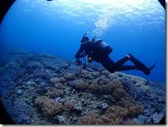 okinawa diving1286