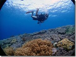 okinawa diving1287