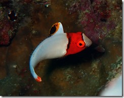 okinawa diving1289