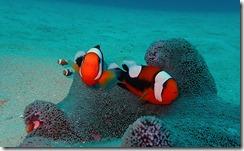 okinawa diving1304