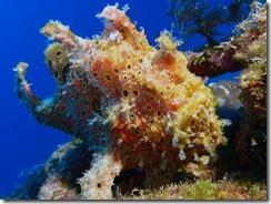okinawa diving1305