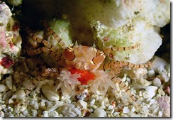 okinawa diving1306