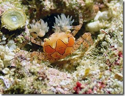 okinawa diving1307