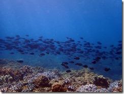 okinawa diving1322