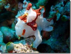 okinawa diving1323