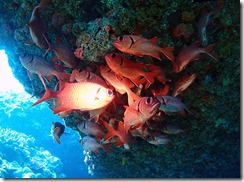 okinawa diving1324