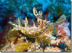 okinawa diving1325