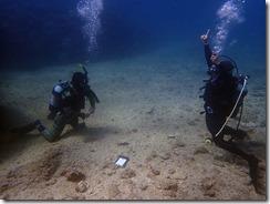 okinawa diving1331