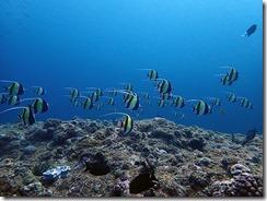okinawa diving1338